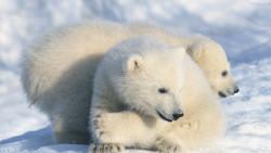 阿拉斯加景点-阿拉斯加动物园