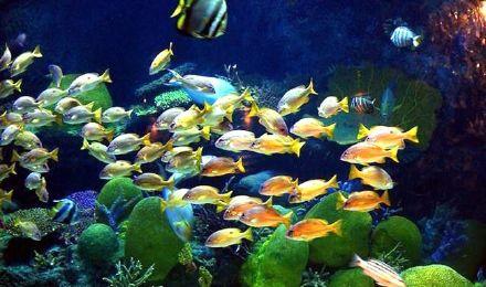 曼谷暹罗 海底世界/海洋馆电子票(多套餐可选)