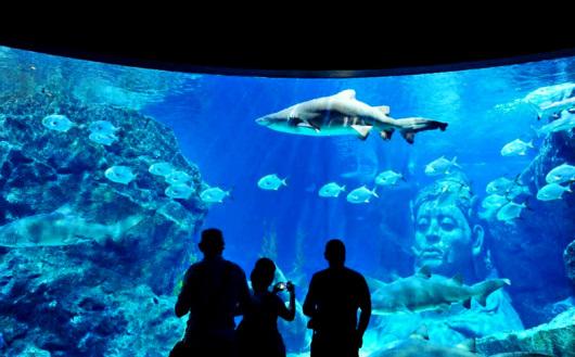 泰国曼谷暹罗海底世界一日游(水族馆 4d电影 玻璃船 幕后参观 可乐爆