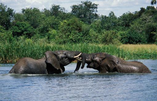 乌干达murchison falls np(穆奇森瀑布国家公园)3日动物追踪之旅