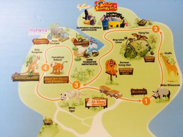 新加坡动物园饲养了世界上最多的人猿,安顿了世界上最大的人猿群体.