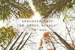 """""""嘉""""的颜色,是抱不住的阳光和藏不住的落叶(嘉兴欣赏落叶攻略)"""