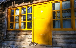 【哈巴河图片】跌落在一片灿烂金黄里----2015中秋的北疆