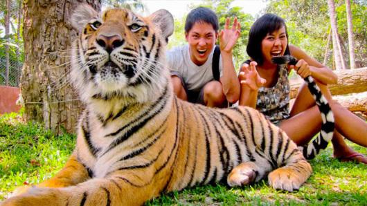 清迈美莎大象营 老虎园 3d艺术馆包车一日游(5座车;泰语司机 中文导游