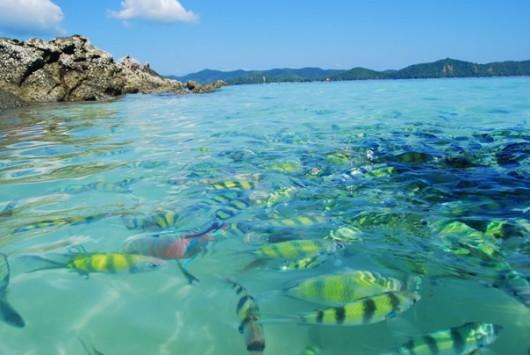蚊子岛快艇浮潜一日游