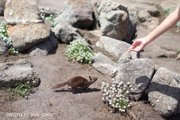 一只孤独的小松鼠伫立在礁石上,背影竟有种苍凉落寞之感.图片