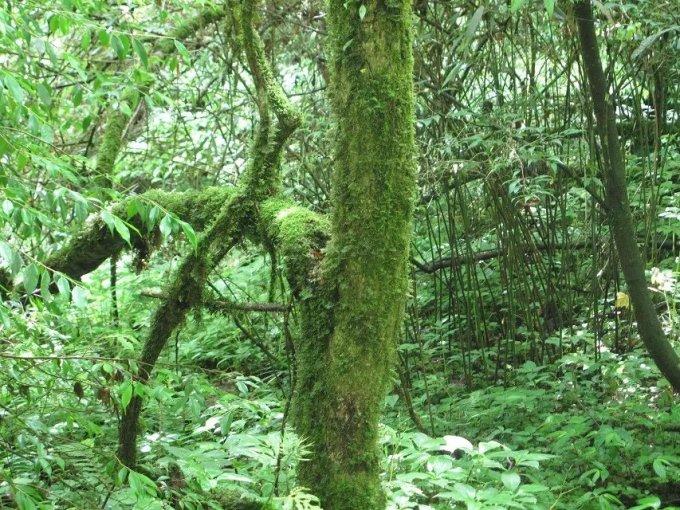 湖北恩施鹤峰木林子原始森林----与世隔绝的一片净土