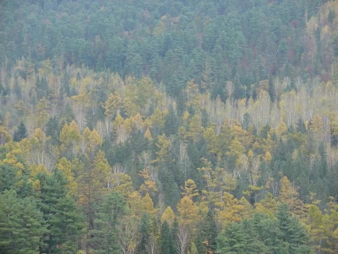 五营国家森林公园坐落在黑龙江省伊春市境内,位于小兴安岭南坡的中麓