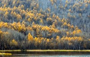 【阿尔山图片】那个金色的哈伦阿尔山……