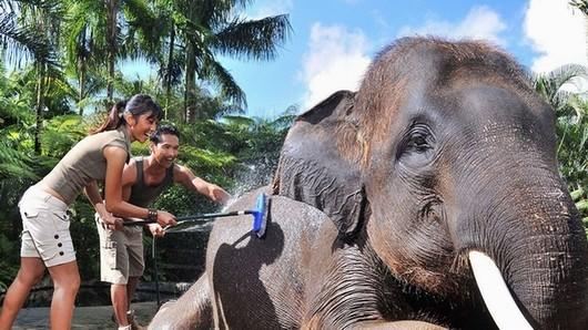 【巴厘岛大象漂流记】漂流+大象公园一