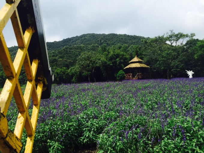 广州从化石龙国家森林公园