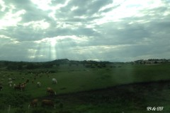 【B&W】风吹草低见牛羊 — 坝上撒欢记