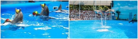 普吉 尼莫海豚馆·海豚表演门票【含接送】