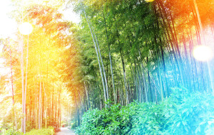 【无锡图片】^-^慧^-^恋上宜兴乡村:赏竹、听溪、品茶、骑行-------乐陶陶