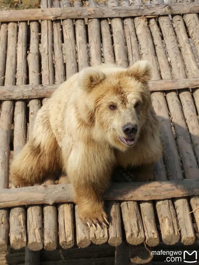 争先恐后的熊大熊二 非洲草原