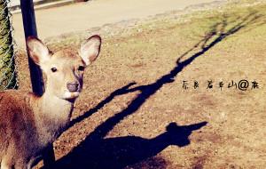 【白滨町图片】赏枫季-八天七夜日本关西行(武汉直飞)