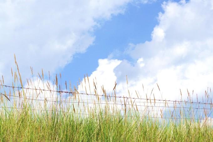 青海湖自助遊攻略