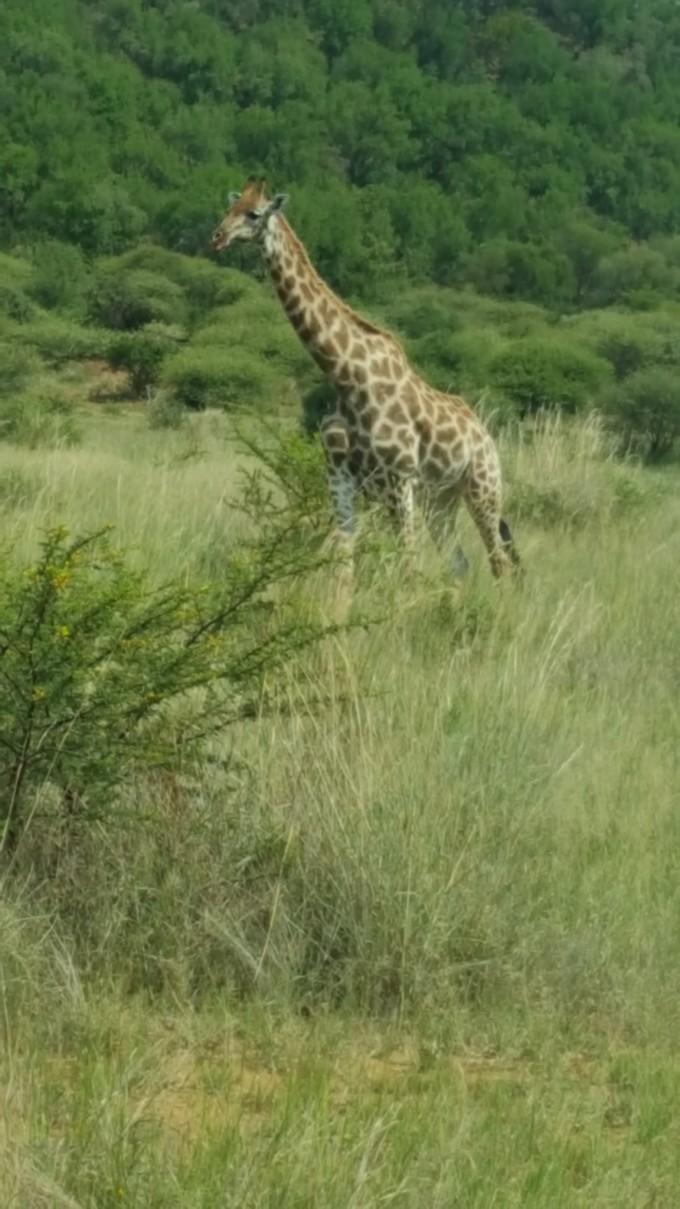 南非自助遊攻略