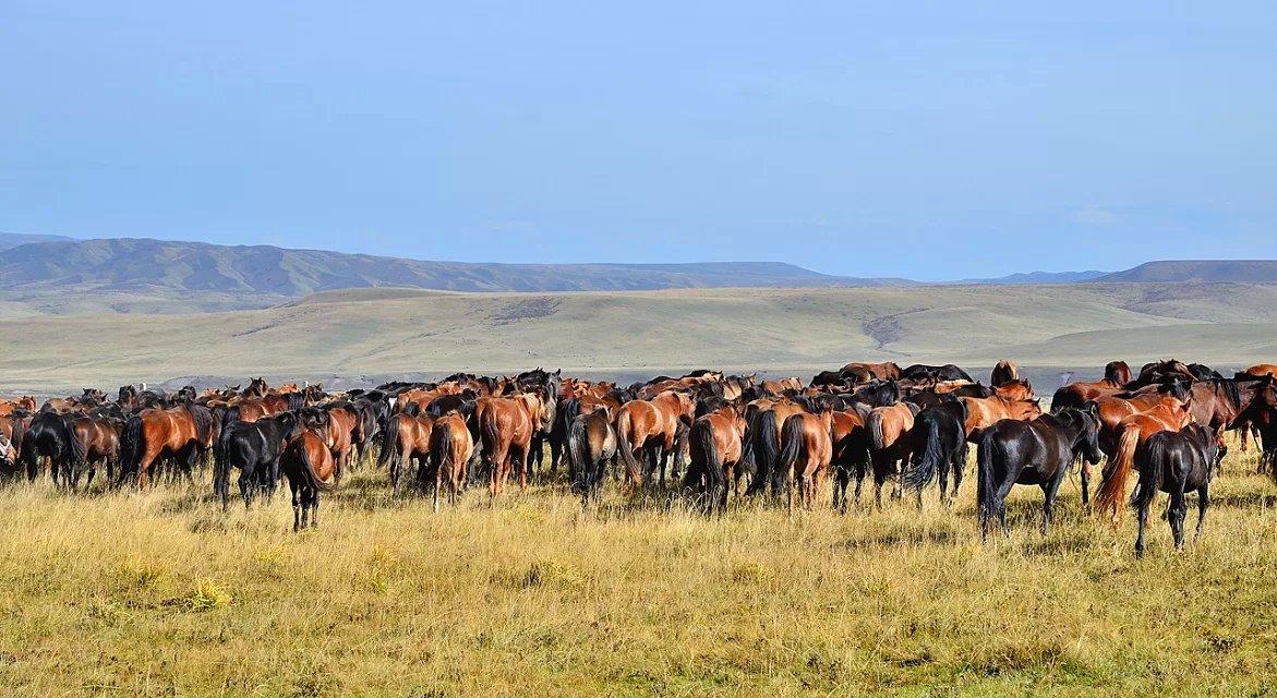 Gansu ShanDan Military horse farm