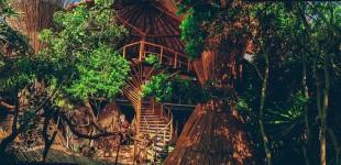 住过最美的树屋酒店
