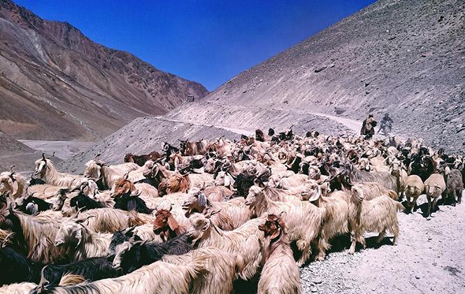 印度Spiti Valley,神之领土(上)